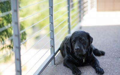 Overhold loven, når du har hund